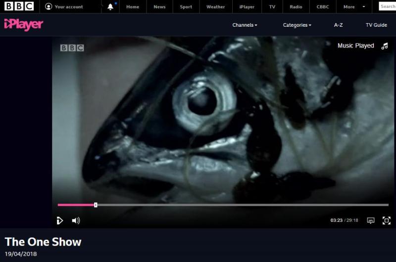 BBC One Show 19 April 2018 #1 sea lice salmon