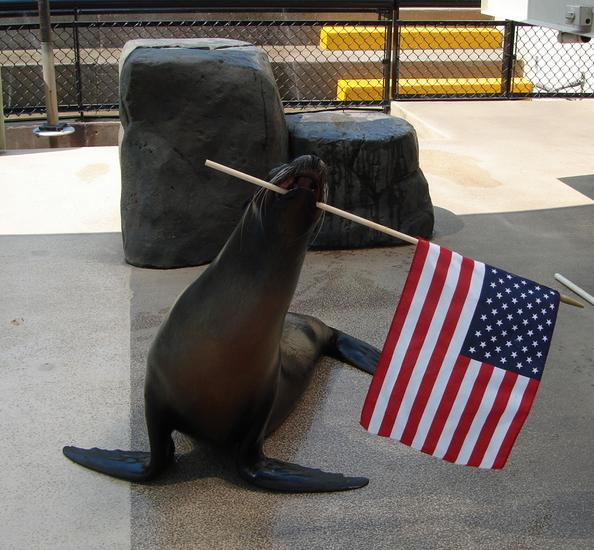 US flag sea lion