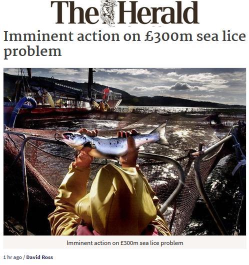Herald 9 Jan 2017 #1