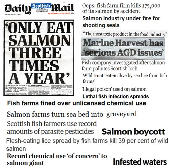 25 Years of Scottish Salmon Shame #2 collage
