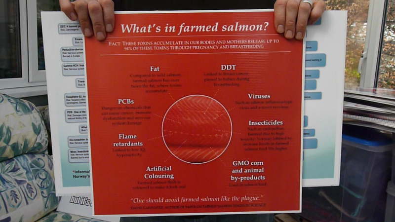 What's in farmed salmon