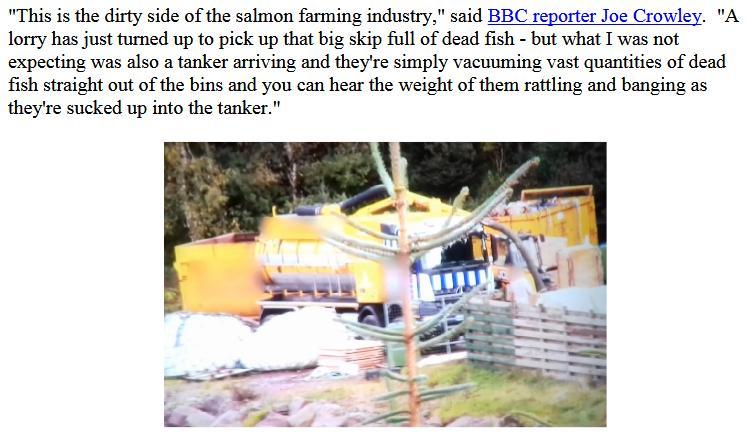 BBC Dead Salmon #1