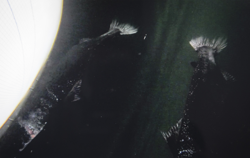 Photo Stills #7 Head and tail damage reflected from surface
