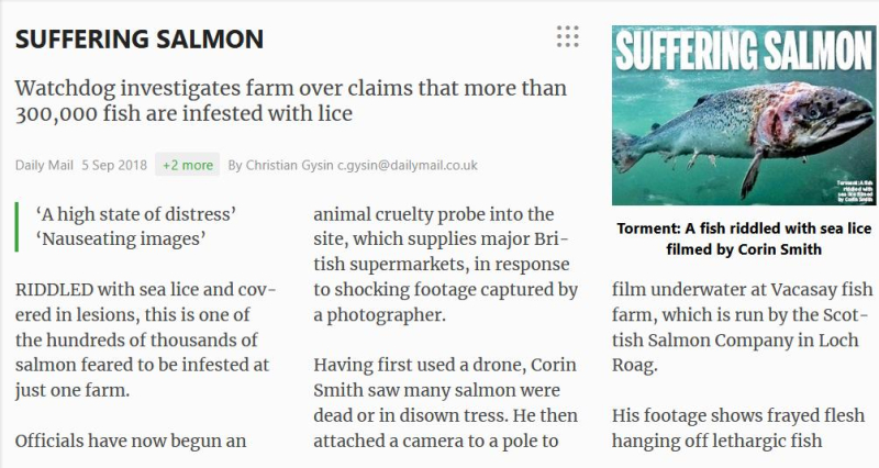 Daily Mail Suffering Salmon 5 September 2018 #2