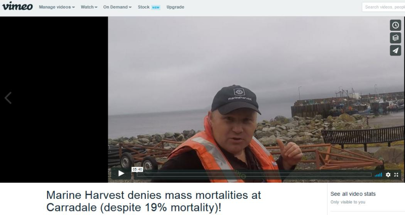 Vimeo MH Carradale mort denial