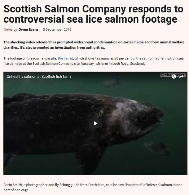 Salmon Business 5 Sept 2018 #1