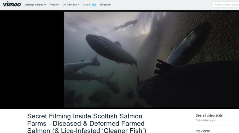 Vimeo #4 deformed fish swimming above