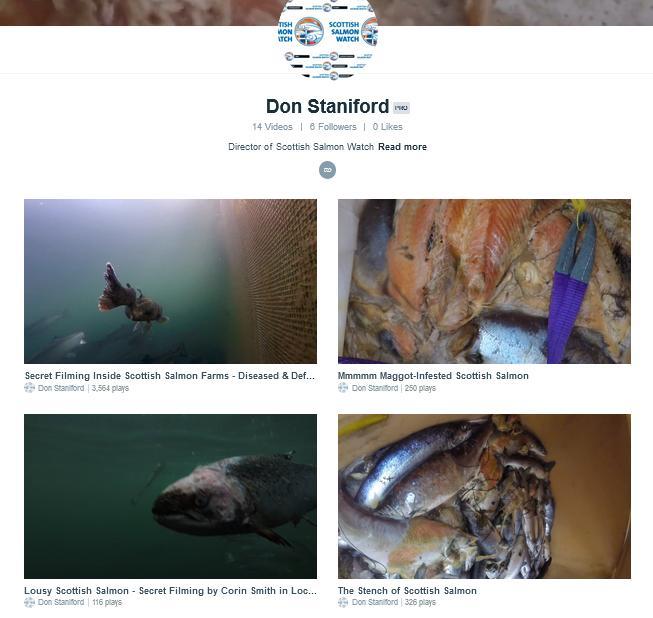 Vimeo collage #1