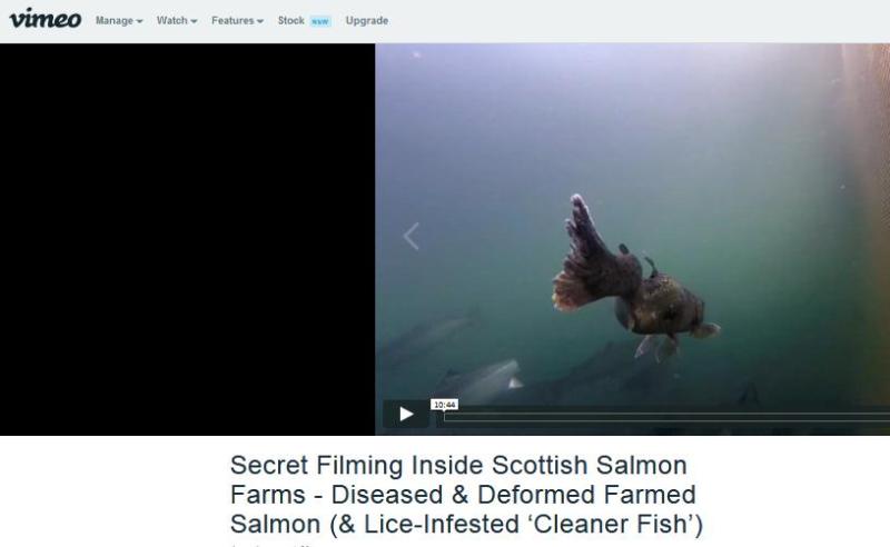 Sunday Post 30 September 2018 Vimeo link