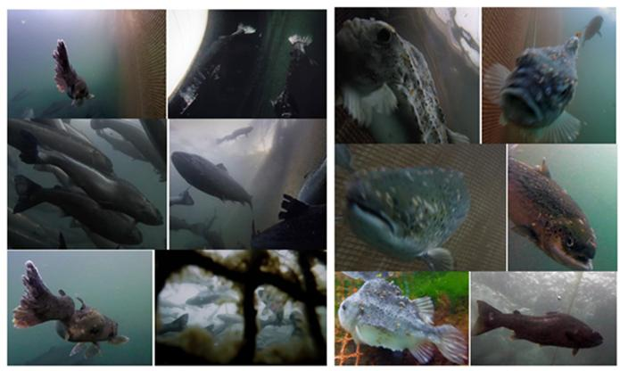 Collage of Photo Stills #1