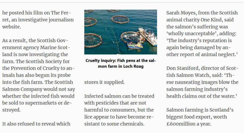 Daily Mail Suffering Salmon 5 September 2018 #4