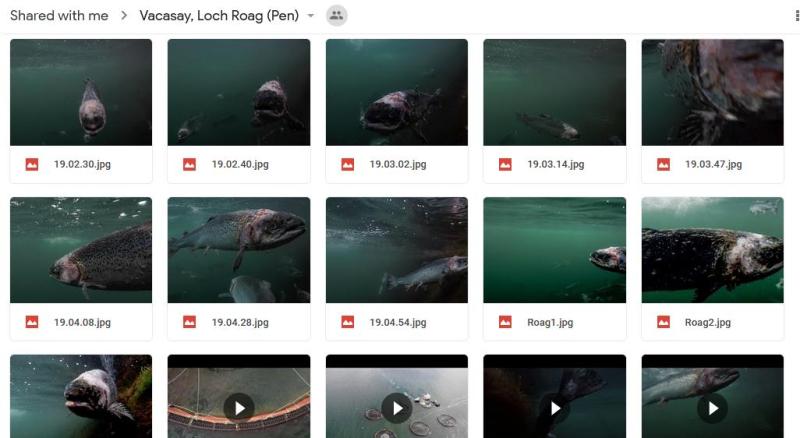 Corin photo gallery Google Drive