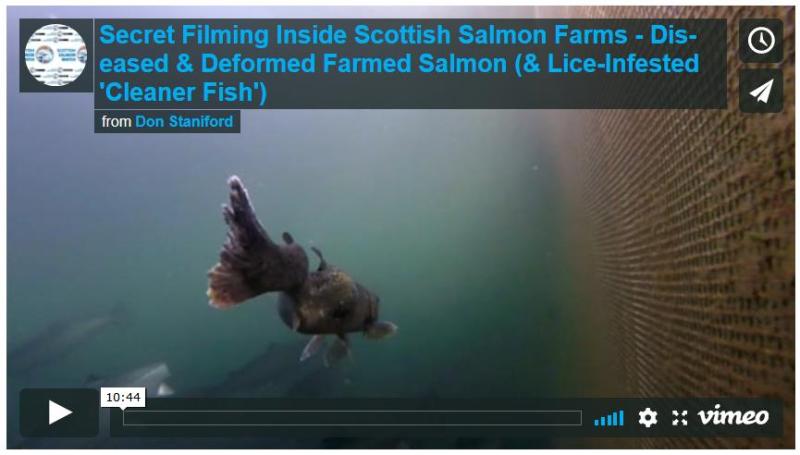 PETA on Shocking Video 13 Sept 2018 Vimeo