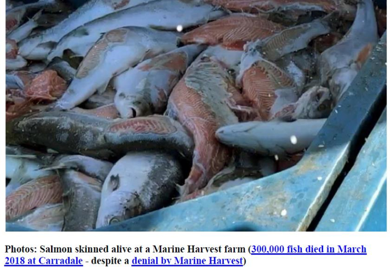 PR The Skinny on Scottish Salmon 15 Oct 2018 #2