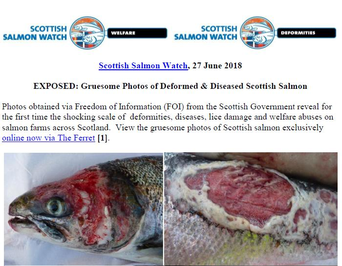 PR Exposed - Gruesome Photos of Deformed & Diseased Scottish Salmon 28 June 2018 #1