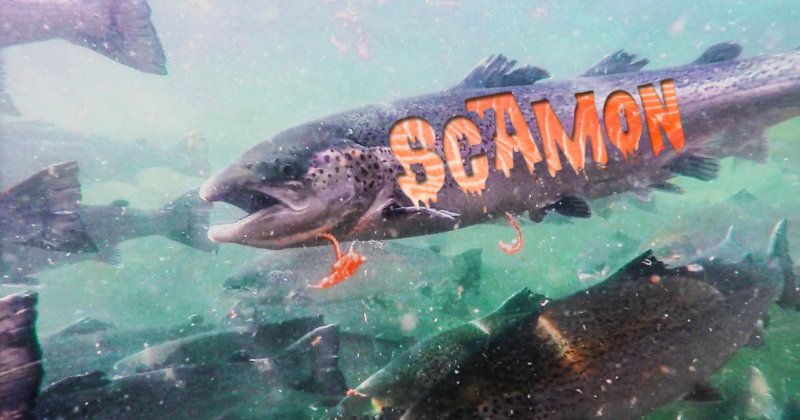 Scottish Scamon word in flesh of fish