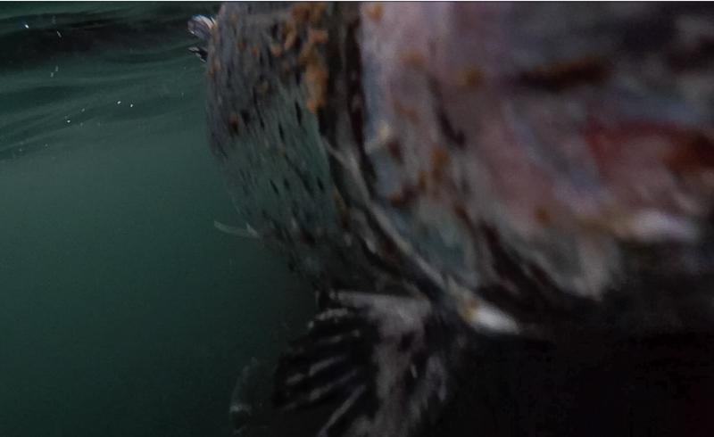 Corin photo Loch Roag #7