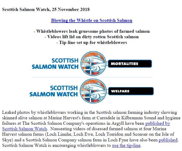 PR Blowing the Whistle on Scottish Salmon 25 Nov 2018 #1