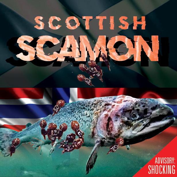 ScamonFilm-1c