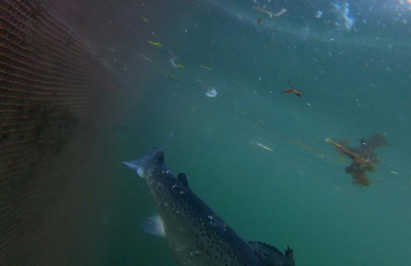 Photo Arran #11 lice-infested tail GOPRO1196 11 secs
