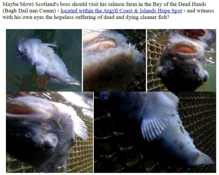 PR Exposing Scottish Salmon's Dirty Secrets 22 July 2019 #4