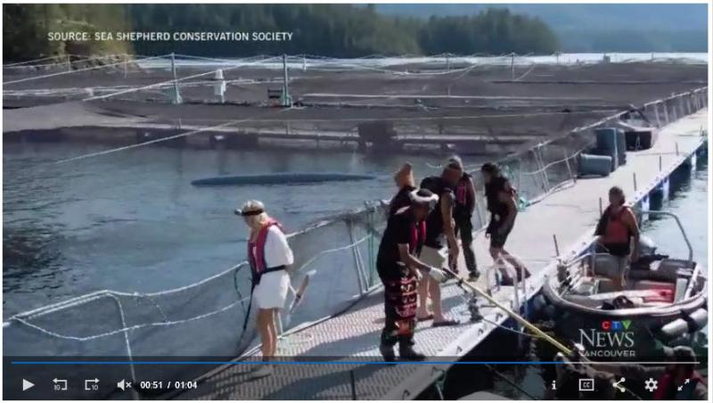 Swim against fish farm #15