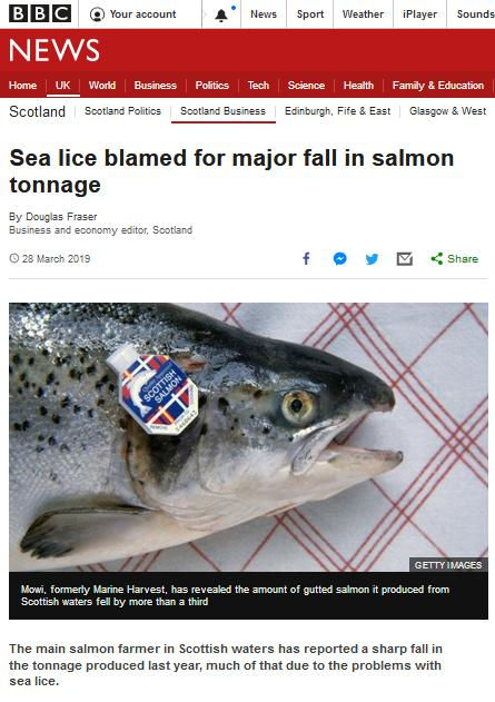BBC Sea Lice Blamed for Major Fall in Tonnage 28 March 2019 #1
