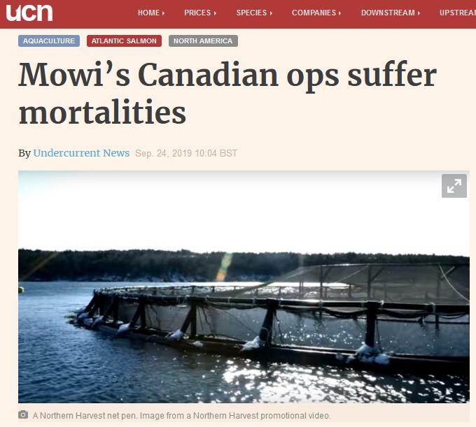 Mowi morts in Canada sept 2019 #1