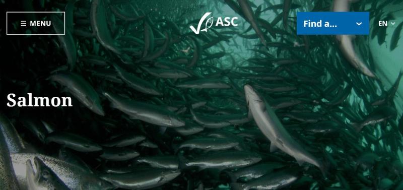ASC salmon #2