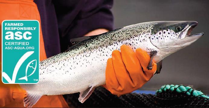 ASC salmon #3