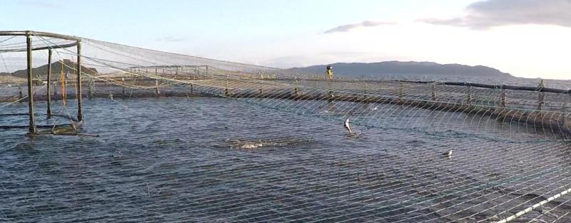 Photo #4 Leaping salmon