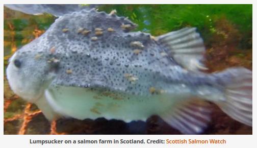 Cleaner fish #2