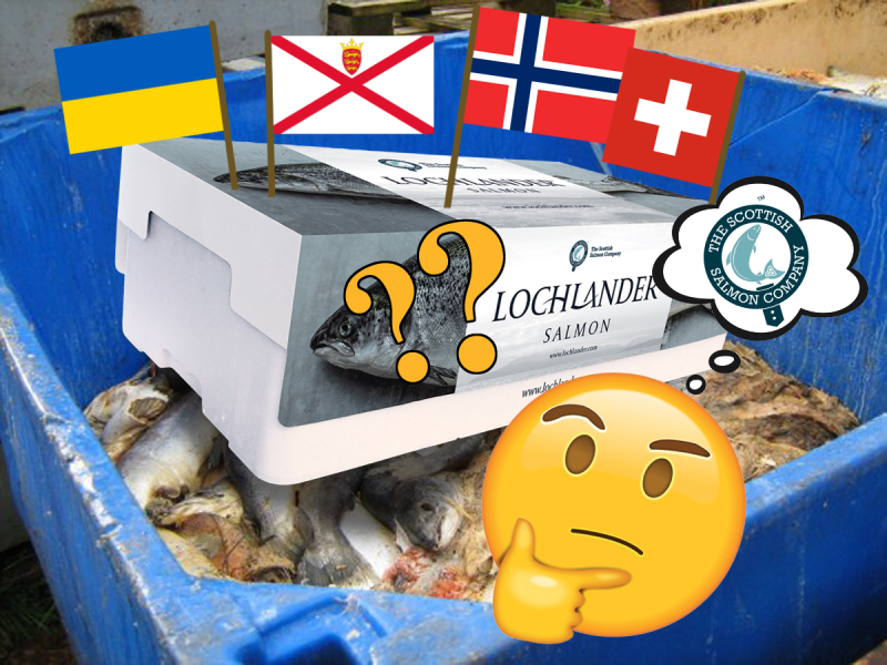 SSC Lochlander flags in mort bin