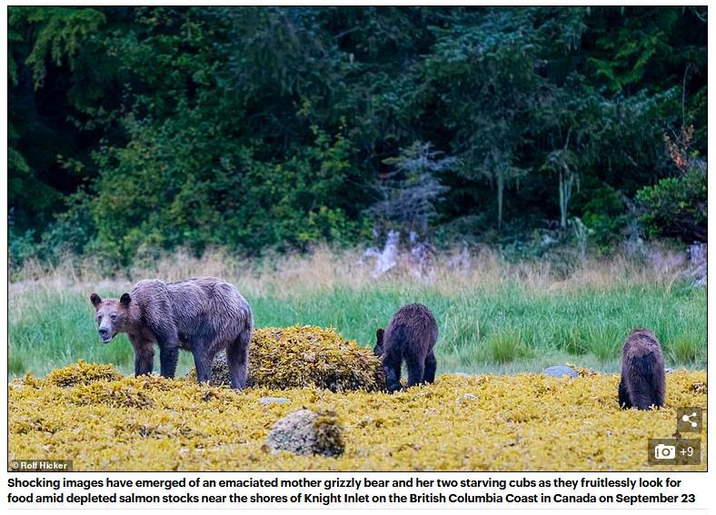 Bear blog #2