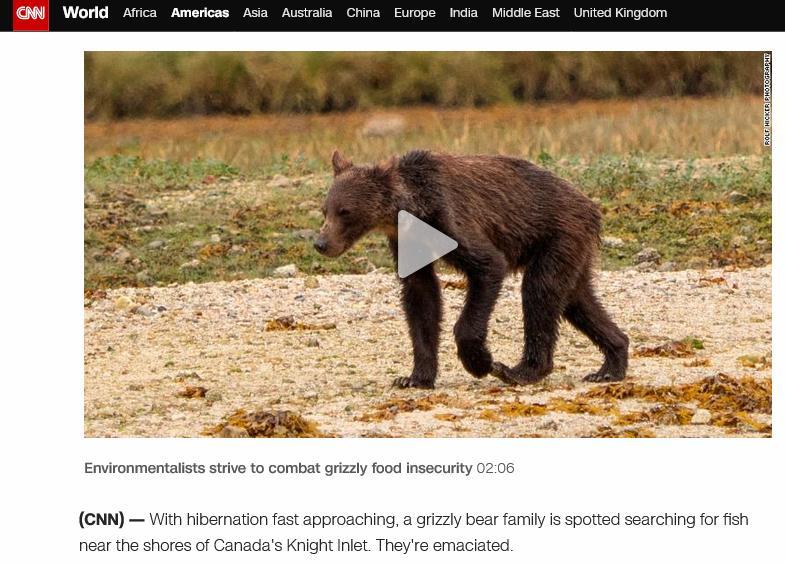 Bear blog #6
