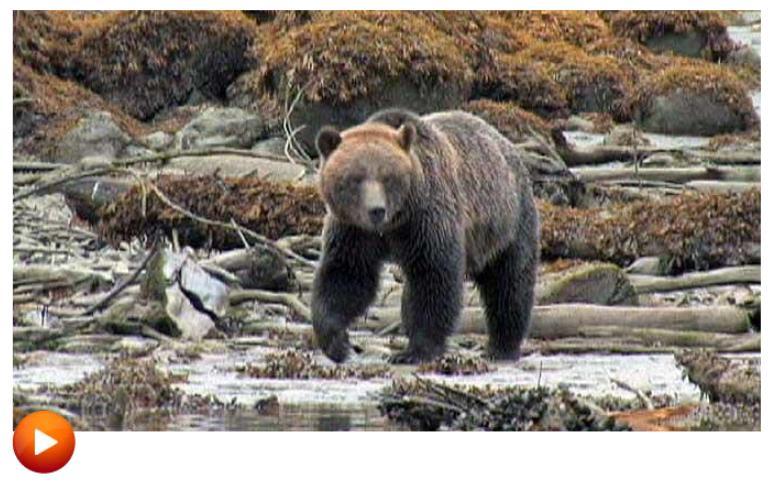 Bear blog #14