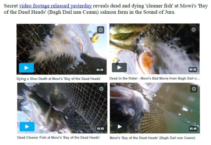PR Exposing Scottish Salmon's Dirty Secrets 22 July 2019 #2