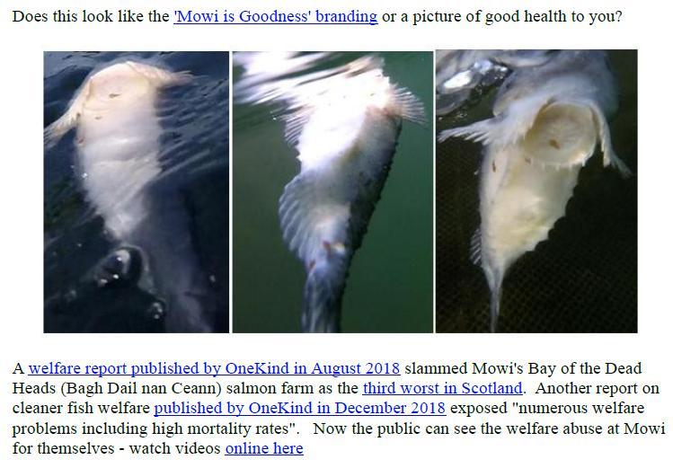PR Exposing Scottish Salmon's Dirty Secrets 22 July 2019 #5