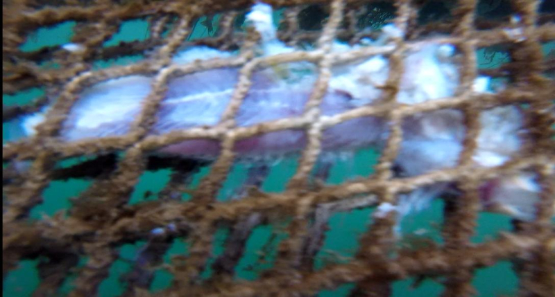 Ardintoul Photo #8 Dead salmon in net