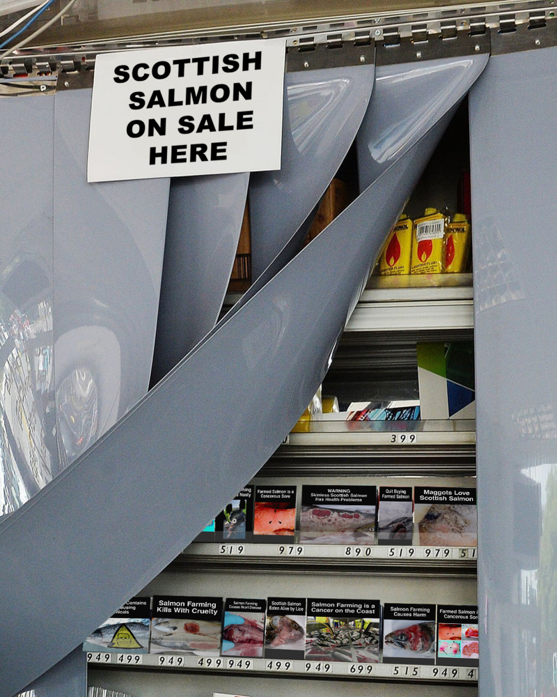 Gallery #2 curtain Scottish salmon sold here