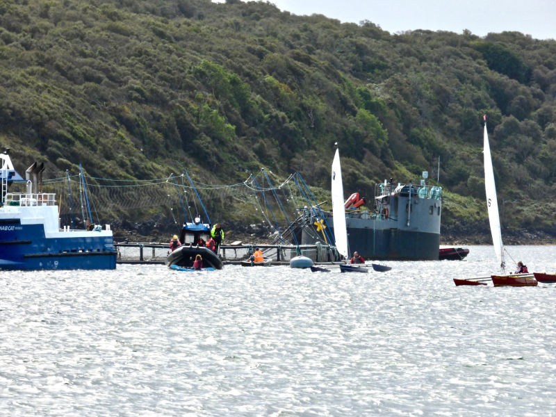 Photo #8 Don dwarfed by Mowi boats with Shuna yachts