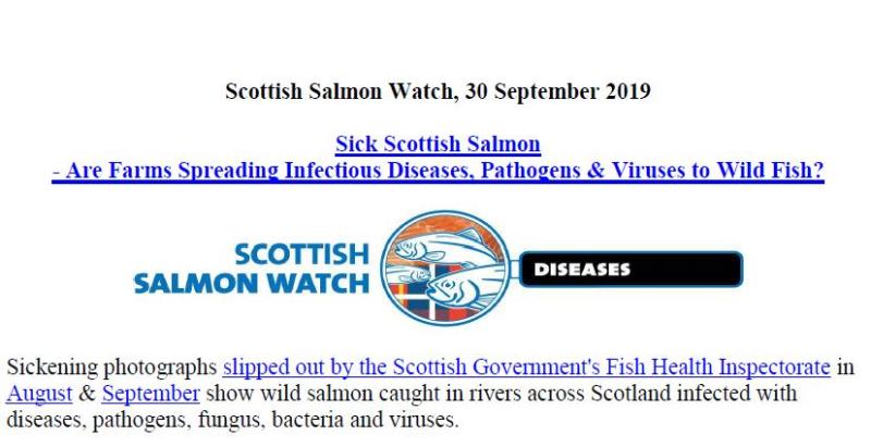 PR Sick Scottish Salmon 30 Sept 2019 #1