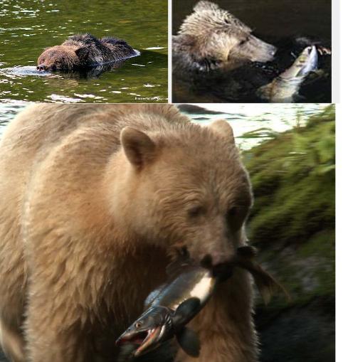 Bear blog #10