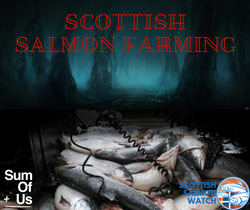 Halloween Scottish Salmon Farming graphic with SumOfUs bigger file