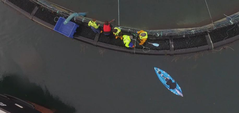 Drone footage from Ardintoul 2 Nov 2019 Photo #23 kicking paddle