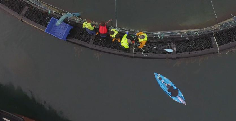 Drone footage from Ardintoul 2 Nov 2019 Photo #24 kicking paddle