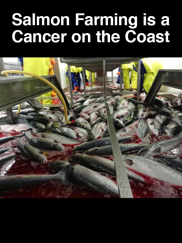 #9 Salmon Farming is a Cancer on the Coast