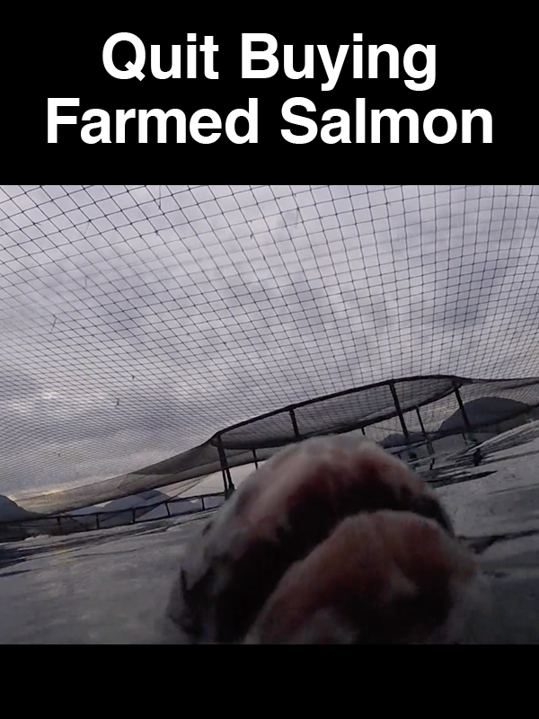 #21 Quit Buying Farmed Salmon