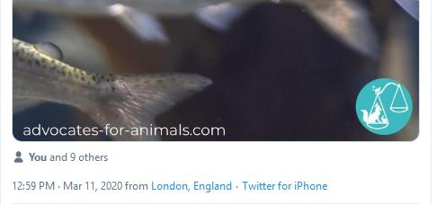 Advocates for Animals Tweet 11 March 2020 #2