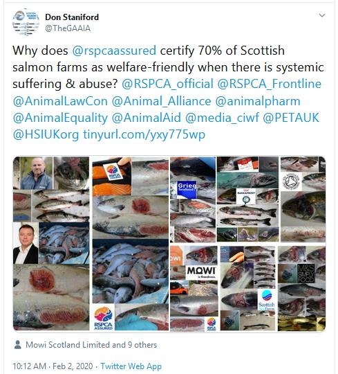 The Faces of Scottish Salmon Feb 2020 Tweet 2 Feb 2020